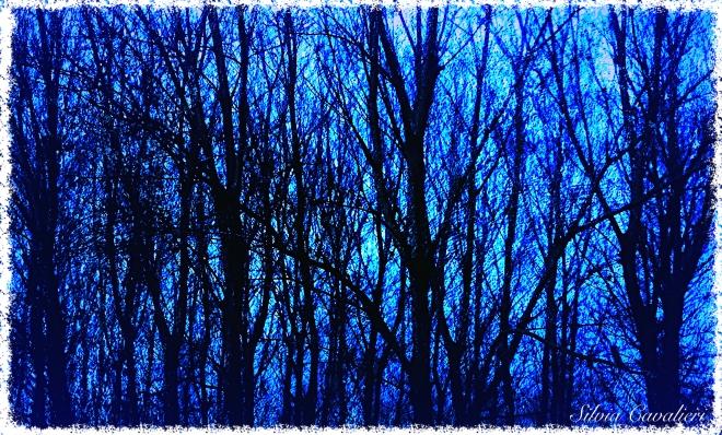 bosco nudo azzurro