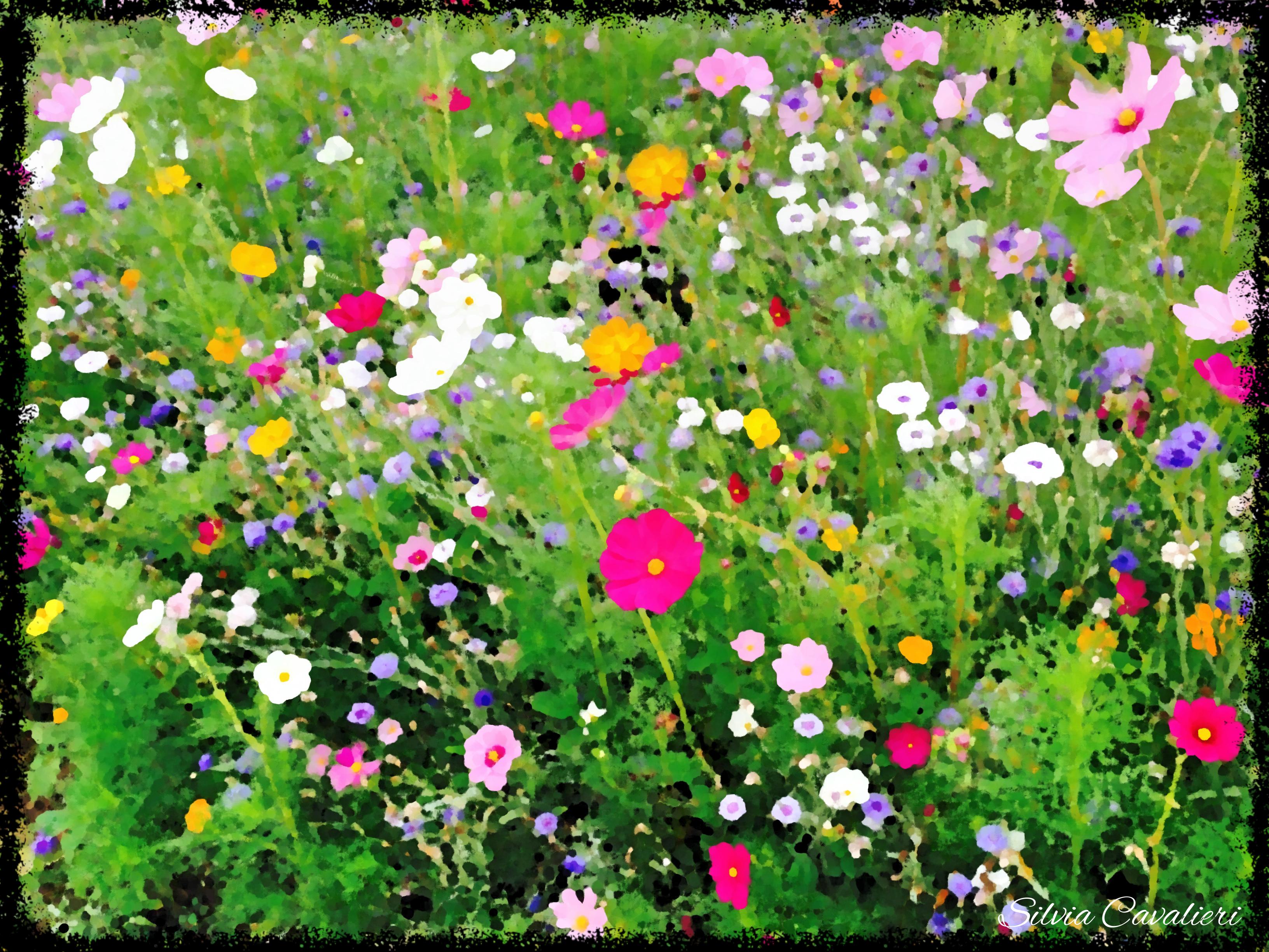 Terre di fiori il blog di silvia cavalieri for Fiori ad olio