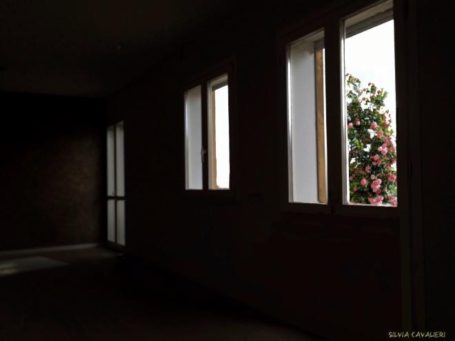 casa scura scura e le rose